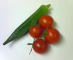 収穫した野菜達
